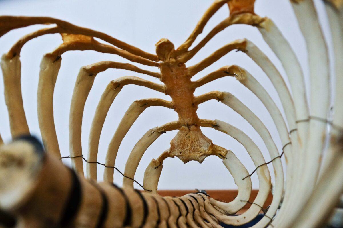 肋骨との関係性